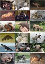 哺乳动物多样性